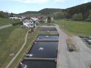 Fischfarm Haiterbach Beihingen